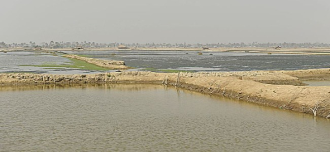 Our research team is interested in whether shrimp farming, one of many potential livelihoods in southwest Bangladesh, is destructive to the social, political, and economic resilience of a community.