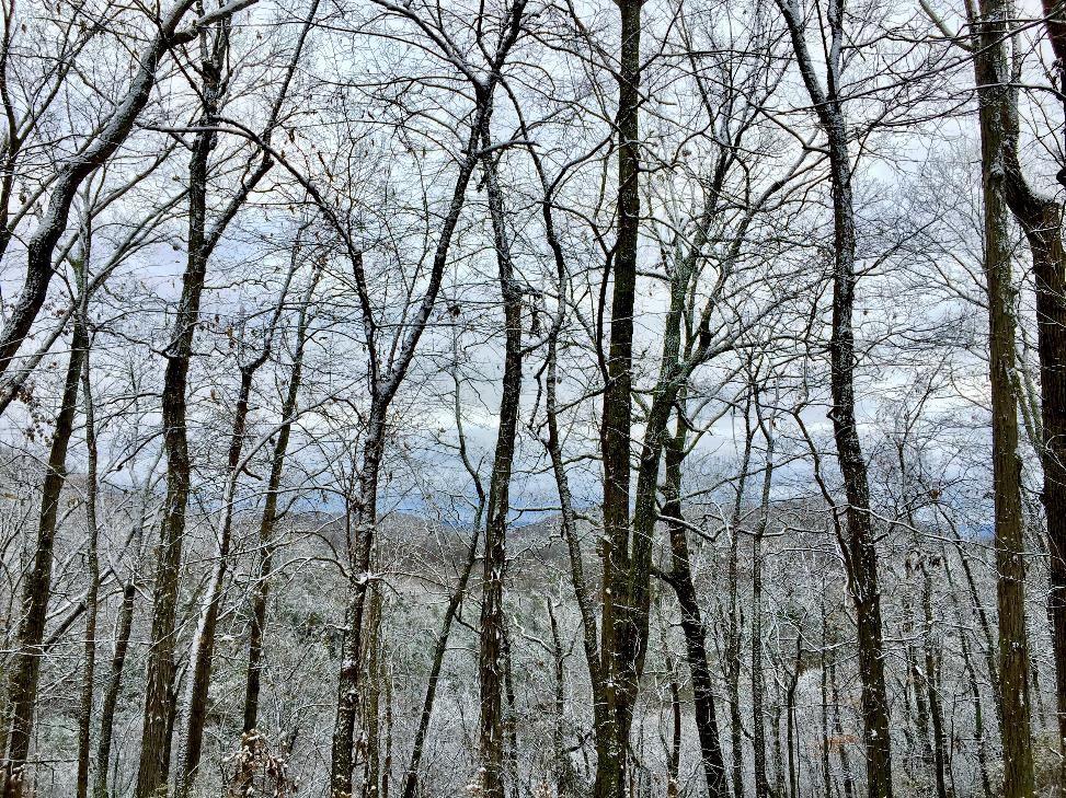 dyer-3-2019-snow