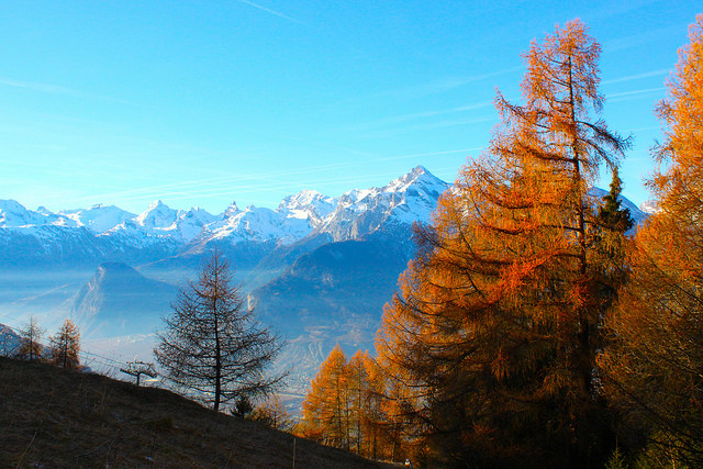 Fall foliage in the foreground with snow-covered Alps in the background.