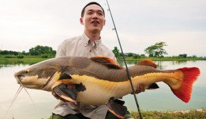 "Michael Yiran ""Mike"" Ma reeled in a redtail catfish of world-record length last June in central Thailand. The catfish (Phractocephalus hemioliopterus) was 107 centimeters long, or just over 42 inches, and set the all-tackle world record for length, confirmed by the International Game Fishing Association. Ma released the fish."
