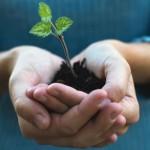 sustainabilityplant